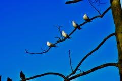 Ptaki piórko gromadzący się wpólnie zdjęcia stock