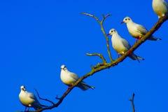 Ptaki piórko gromadzący się wpólnie zdjęcie royalty free