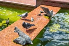 Ptaki przy fontanną obrazy royalty free