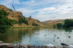 Ptaki przy St Margaret's Loch i ruinami St Anthony's kaplica obrazy royalty free