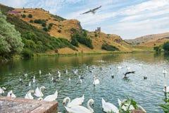 Ptaki przy St Margaret's Loch i ruinami St Anthony's kaplica zdjęcie royalty free