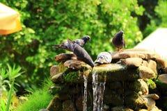 Ptaki przy waterhole w upale przy zatoczką Obraz Stock