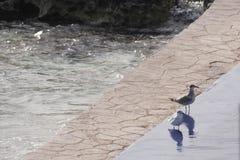 Ptaki przygotowywa dla kąpać się na basenie obraz royalty free