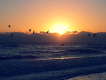 Ptaki raj Obraz Royalty Free