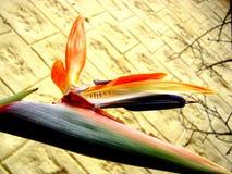 Ptaki raj, kwiat Zdjęcia Royalty Free