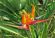 Ptaki raj w profilu zdjęcie royalty free