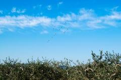 Ptaki siedzi na drucie linia energetyczna przeciw niebieskiemu niebu Obraz Royalty Free
