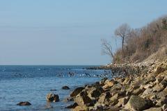 Ptaki siedzi na ląd Fotografia Stock