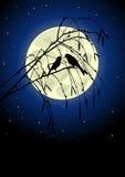 ptaki silhouette dwa Fotografia Royalty Free