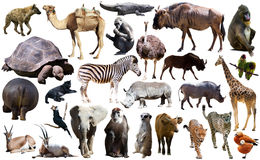 Ptaki, ssak i inni zwierzęta Afryka, odizolowywali Fotografia Royalty Free