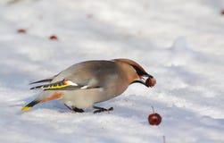 Ptaki stepy Zdjęcia Stock