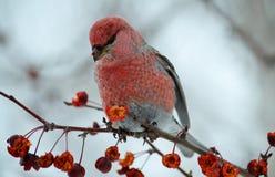 Ptaki stepy Zdjęcia Royalty Free