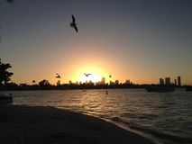 ptaki szczęśliwi Obrazy Stock