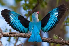 Ptaki Tanzania obraz stock