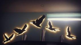Ptaki ten sam upierzają kierdla wpólnie! Obraz Royalty Free