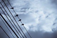 Ptaki umieszczający na drutach Zdjęcie Royalty Free