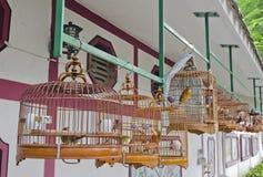 Ptaki w Chińczyka Stylu Ptaka Klatkach zdjęcie royalty free