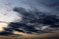 Ptaki w chmurze Zdjęcia Stock
