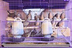 Ptaki w dużej klatce Obrazy Stock