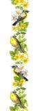Ptaki w dzikich ziele, kwiaty watercolour Wielostrzałowa granicy rama Obraz Royalty Free