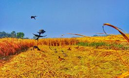 Ptaki w irlandczyk ziemi zdjęcia royalty free