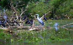 Ptaki w jeziorze Zdjęcia Royalty Free