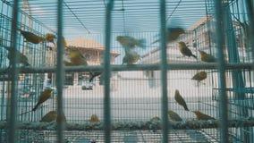 Ptaki w klatce zbiory wideo
