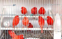 Ptaki w klatce Obraz Stock