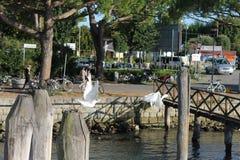 Ptaki w locie Zdjęcia Royalty Free