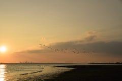 Ptaki w locie przy zmierzchem zdjęcia stock