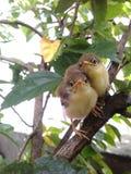 Ptaki w mój ogródzie Zdjęcia Royalty Free