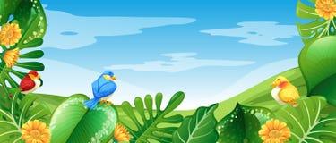 Ptaki w natura krajobrazie royalty ilustracja