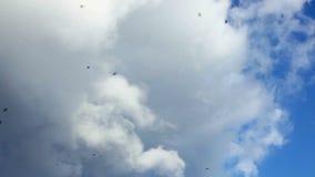 Ptaki w niebie zdjęcie wideo