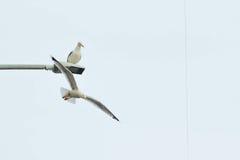 Ptaki w niebie Zdjęcia Royalty Free