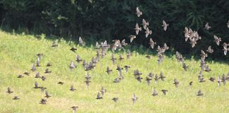 Ptaki w polu 6 Obraz Stock