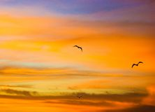 Ptaki w pomarańczowym wschodzie słońca Fotografia Royalty Free