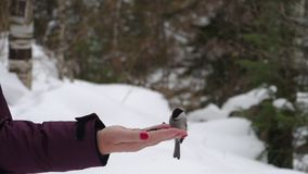 Ptaki w ręce jedzą ziarna zbiory wideo