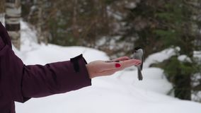 Ptaki w ręce jedzą ziarna zdjęcie wideo