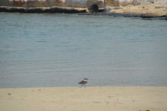 Ptaki wpólnie Zdjęcie Royalty Free