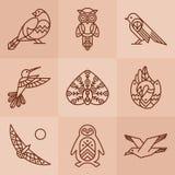 Ptaki wykładają ikony Zdjęcie Stock