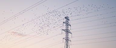 Ptaki zaczynając od wysokiego napięcia drutów fotografia stock