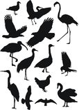 ptaki zbierania danych Obrazy Stock
