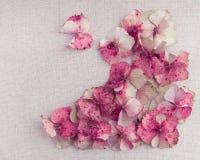 bouquet sec de p tales d 39 hortensia photo stock image 65399379. Black Bedroom Furniture Sets. Home Design Ideas