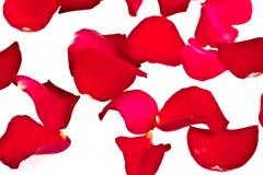 Pétales de Rose Images libres de droits