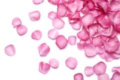 Pétales de Rose rose Photos libres de droits