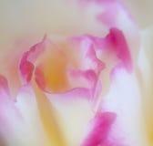 pétales roses Photographie stock libre de droits