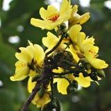 Pétalos amarillos Imagen de archivo libre de regalías