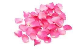 Pétalos color de rosa del primer en blanco Fotografía de archivo libre de regalías