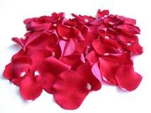 Pétalos color de rosa rojos Imágenes de archivo libres de regalías