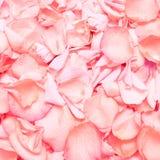 Pétalos color de rosa rosados, fondo Imagen de archivo libre de regalías